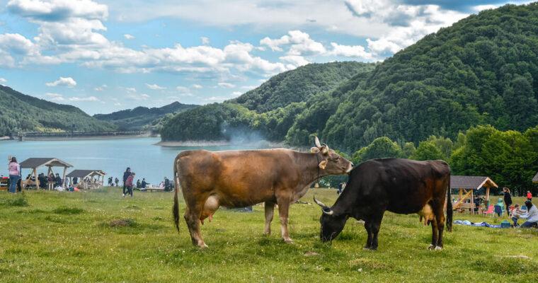 Barajul Paltinu & Valea Doftanei – evadare în natură, aproape de București