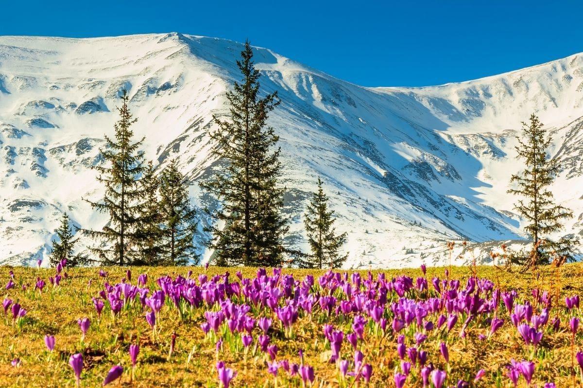 10 locuri de vizitat în România primăvara